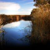 Les marais Photographie stock libre de droits