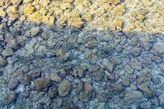 Les masses des poissons en mer Image stock
