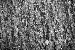 Les matériaux de construction du bois et du bois écorcent comme fond et tex photographie stock libre de droits