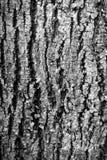 Les matériaux de construction du bois et du bois écorcent comme fond et tex photo libre de droits
