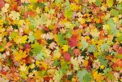 Les meilleures couleurs d'automne photos libres de droits
