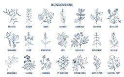 Les meilleures herbes de sédatifs illustration stock