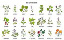 Les meilleures herbes de sédatifs illustration de vecteur