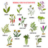 Les meilleures herbes médicinales pour l'ostéoarthrite illustration stock
