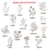 Les meilleures herbes médicinales pour l'ostéoarthrite Photos stock