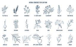 Les meilleures herbes médicinales pour la douleur aux oreilles illustration de vecteur