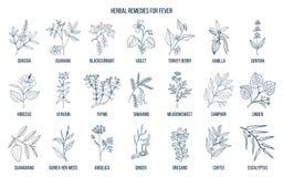 Les meilleures herbes médicinales pour la fièvre illustration de vecteur
