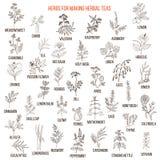 Les meilleures herbes pour des thés illustration de vecteur
