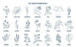 Les meilleures herbes pour l'aromatherapy illustration libre de droits