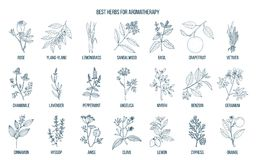 Les meilleures herbes pour l'aromatherapy Photo stock