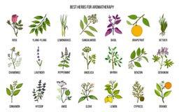 Les meilleures herbes pour l'aromatherapy illustration de vecteur