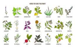 Les meilleures herbes pour le traitement d'acné Photographie stock libre de droits