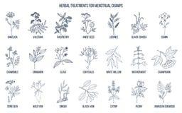 Les meilleures herbes pour le traitement menstruel de crampes illustration de vecteur