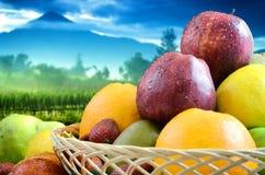 Les meilleures illustrations 05 de fruits et de légumes Images libres de droits