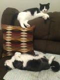 Les meilleurs amis de chat Photos libres de droits