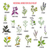 Les meilleurs remèdes de fines herbes pour le soulagement colique Image stock