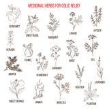 Les meilleurs remèdes de fines herbes pour le soulagement colique illustration de vecteur