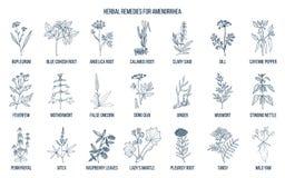 Les meilleurs remèdes de fines herbes pour traiter l'aménorrhée illustration libre de droits