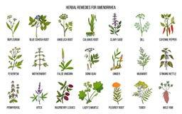 Les meilleurs remèdes de fines herbes pour traiter l'aménorrhée illustration stock