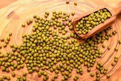Les mensonges bian de Mung sur un conseil olive et est après un scoop olive Image libre de droits