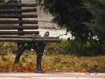 Les moineaux gazouillent Regard d'oiseaux vers la gauche Moineaux en nature image stock
