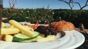 Les moineaux mangent un petit pain sur un hamburger d'un plat banque de vidéos