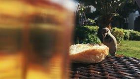 Les moineaux picotent le pain de la table un jour ensoleillé banque de vidéos