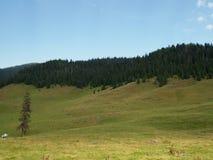 Les montagnes carpathiennes aménagent en parc et ciel bleu en été Photographie stock libre de droits