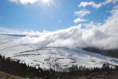 Les montagnes caucasiennes, pin se développe dans les roches Brouillard au-dessus de la vallée dans les montagnes photo stock