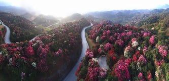Les montagnes couvertes d'azalées Photo stock