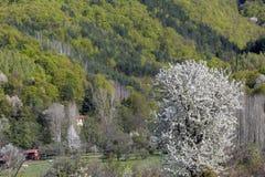 Les montagnes de floraison de ressort de la Bulgarie images libres de droits
