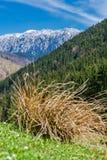 Les montagnes en pierre du prince Photo libre de droits