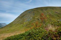 Les montagnes vertes de la réserve naturelle caucasienne à l'aube Photographie stock libre de droits