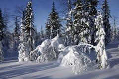 Les Monts Oural polaires Image libre de droits