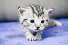 Les mouchards de chaton Un petit joli bébé Photo libre de droits