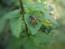 Les mouches collent pour verdir des feuilles image libre de droits