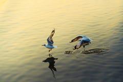 Les mouettes décollent de la mer Images libres de droits
