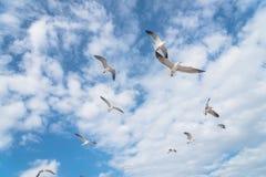 Les mouettes de groupe volent sur le ciel bleu de nuage Image libre de droits