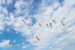 Les mouettes de groupe volent sur le ciel bleu de nuage Photo libre de droits