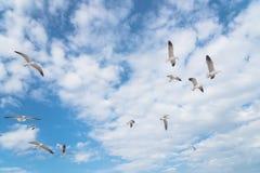 Les mouettes de groupe volent sur le ciel bleu de nuage Image stock