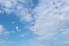 Les mouettes de groupe volent sur le ciel bleu de nuage Photo stock