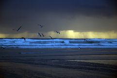 Les mouettes de mer volent à la plage Photographie stock libre de droits