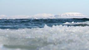Les mouettes glacent l'océan clips vidéos