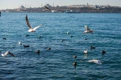 Les mouettes sont sur et au-dessus des eaux de mer Photographie stock