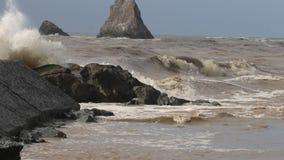 Les mouettes sont sur la plage de roche de chèvre, hiver du comté de Sonoma, la Californie clips vidéos
