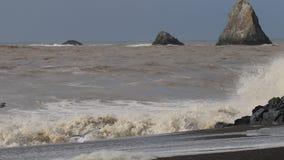 Les mouettes sont sur la plage de roche de chèvre, hiver du comté de Sonoma, la Californie banque de vidéos