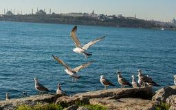 Les mouettes sont sur la roche par des eaux de mer Photographie stock libre de droits