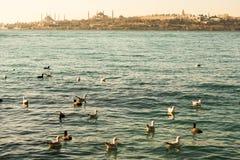 Les mouettes sont sur la roche par des eaux de mer Image libre de droits