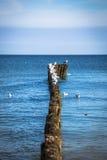 Les mouettes sur des brise-lames dans le ressac sur la Pologne Baltique marchent Photographie stock