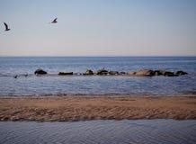 Les mouettes volent au-dessus de l'eau de mer image stock